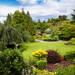 カラーリーフで印象深い庭に!おすすめのカラーリーフや取り入れ方