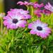 【春の花ガーデニング大特集】育てやすい花はコレ!30選ピックアップ