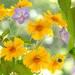 春から初夏のガーデンに植えたい!おすすめの花15選