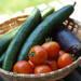 【夏の家庭菜園】おすすめ野菜の収穫方法と栄養素・調理方法は?