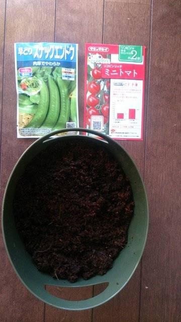 「スナックエンドウ」と「ミニトマト」の同時種まき