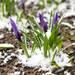 これで冬でもきれいな花を楽しめる!ナチュラルガーデンにおすすめの植物を紹介