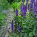 イングリッシュ・ガーデンを巡る旅~スモールハイス・プレイスを訪ねて~