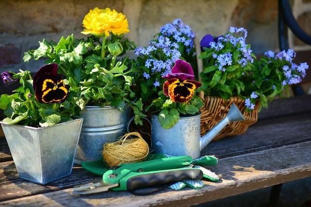 無料の写真: 庭, 花, 植物の花, ガーデニング, スプリング, 私を忘れる - Pixabayの無料画像 - 2179530 (6541)