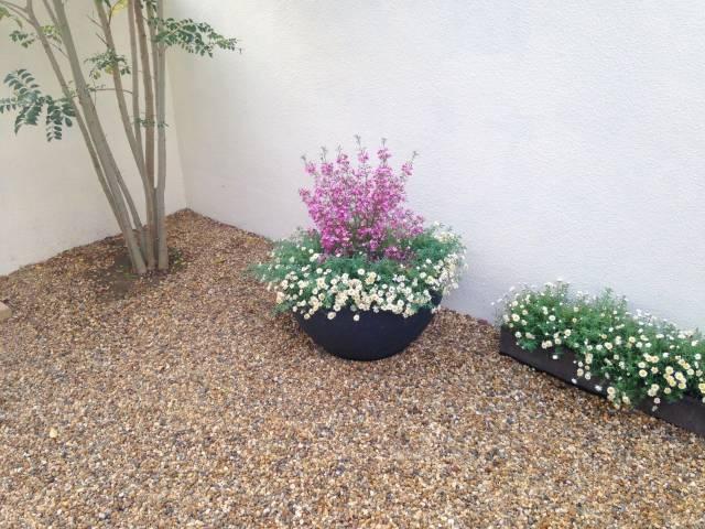 庭の木と花|写真素材なら「写真AC」無料(フリー)ダウンロードOK (6545)