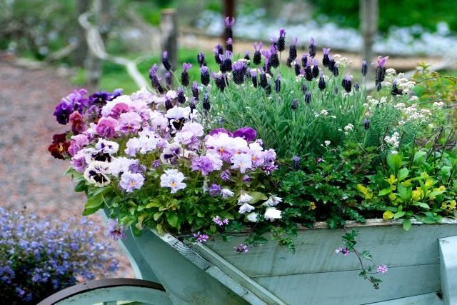 寄せ植えの花|写真素材なら「写真AC」無料(フリー)ダウンロードOK (7121)