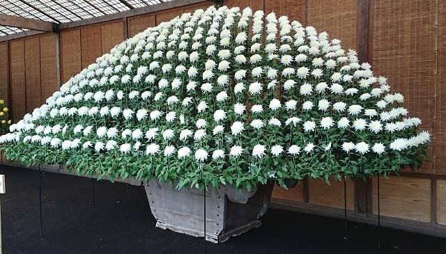 (写真)大作り花壇