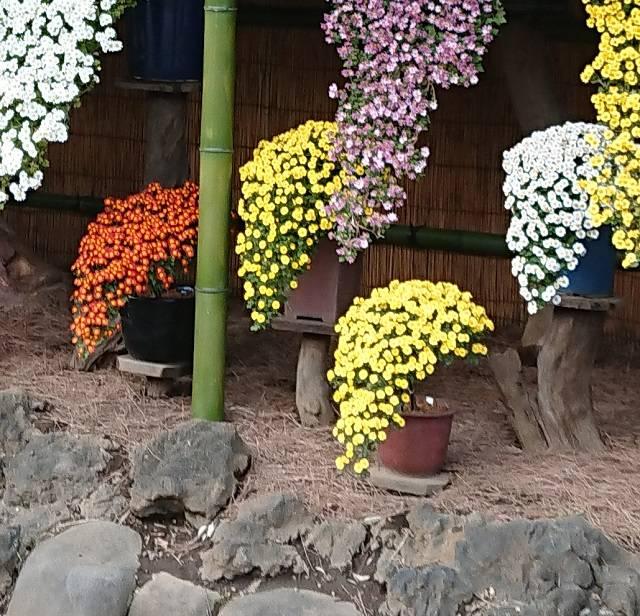 懸崖作(けんがいづく)り花壇(部分)