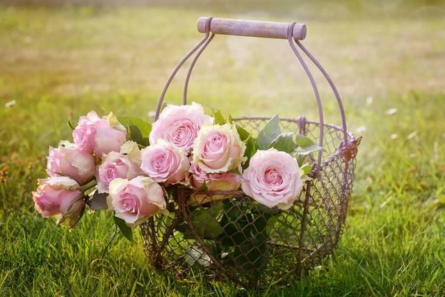 バラ 花 ピンクのバラ · Pixabayの無料写真 (11882)
