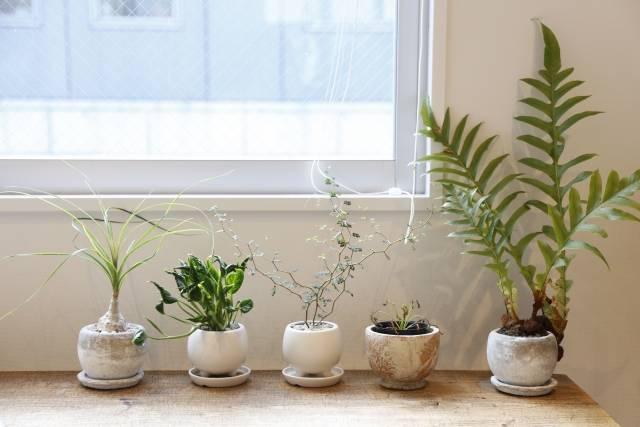 並んだ観葉植物1|写真素材なら「写真AC」無料(フリー)ダウンロードOK (12246)