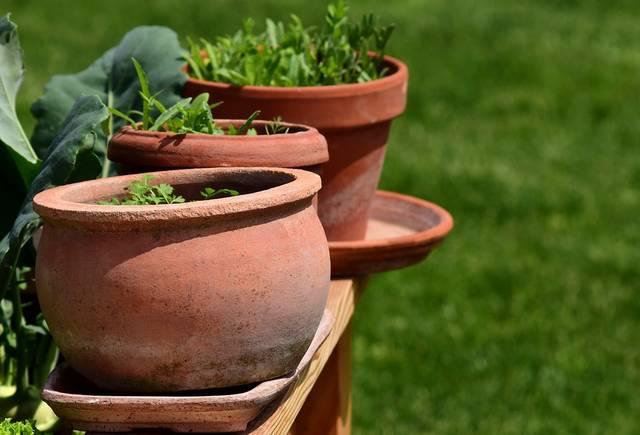 庭 植木鉢 ハーブ · Pixabayの無料写真 (13243)