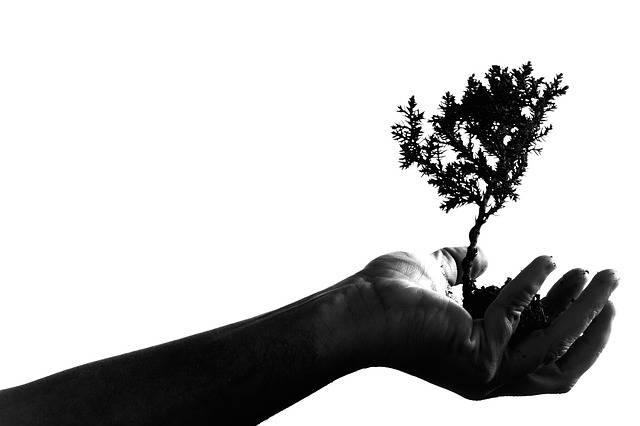 Free photo: Adult, Art, Bonsai, Hand, Plant - Free Image on Pixabay - 1868109 (481)