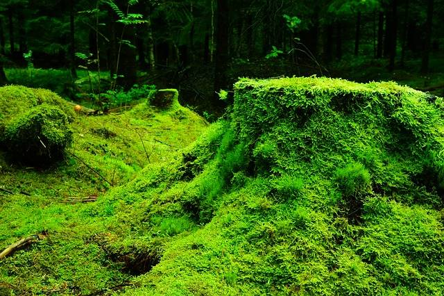 Free photo: Forest, Moss, Norway - Free Image on Pixabay - 483206 (641)