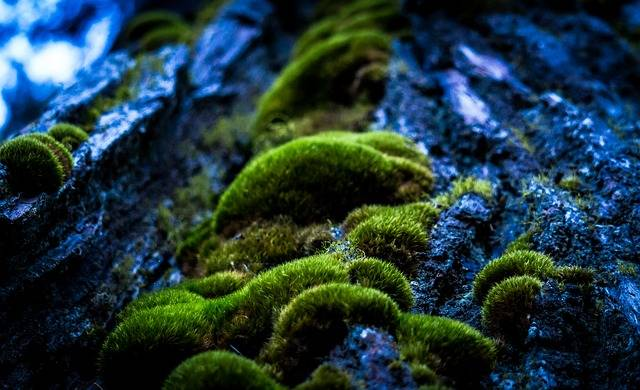 Free photo: Forrest, Macro Photography, Moss - Free Image on Pixabay - 1846892 (643)