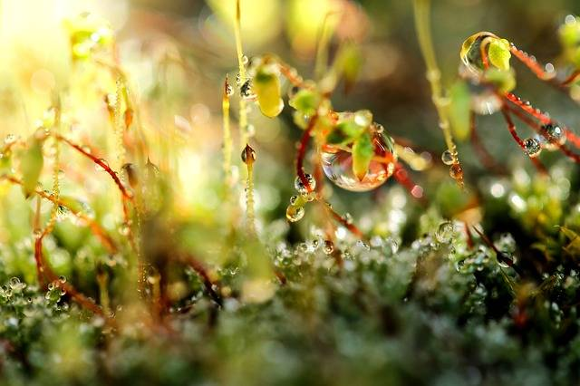 Free photo: Moss, Dew-Drop, Just Add Water - Free Image on Pixabay - 1842055 (644)