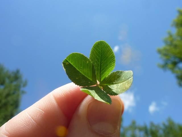 幸せを呼ぶ四つ葉のクローバー