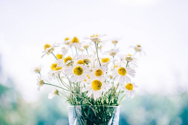 Free photo: Flowers, Glass, Jar, Daisies, White - Free Image on Pixabay - 983897 (1463)