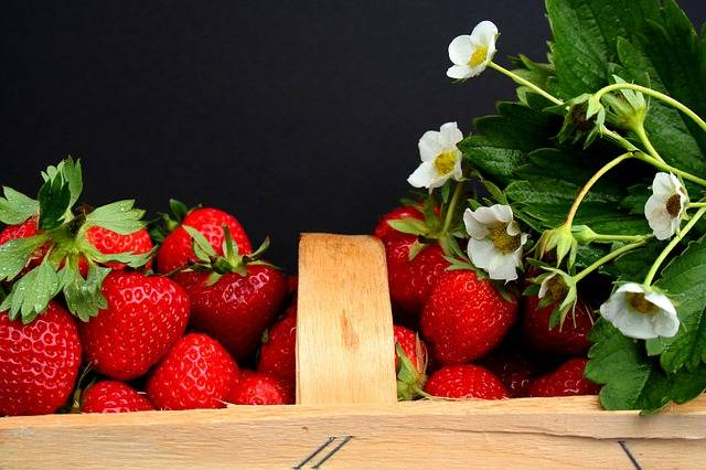 Free photo: Strawberries, Harvest Time, Field - Free Image on Pixabay - 2105656 (2014)