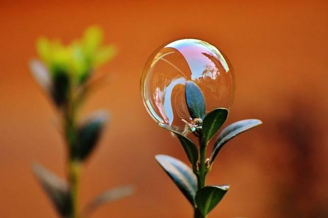 Free photo: Soap Bubble, Colorful, Buxbaum - Free Image on Pixabay - 1900032 (5320)