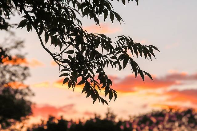 Free photo: Tree, Sunset, Nature, Sky - Free Image on Pixabay - 2664132 (6173)