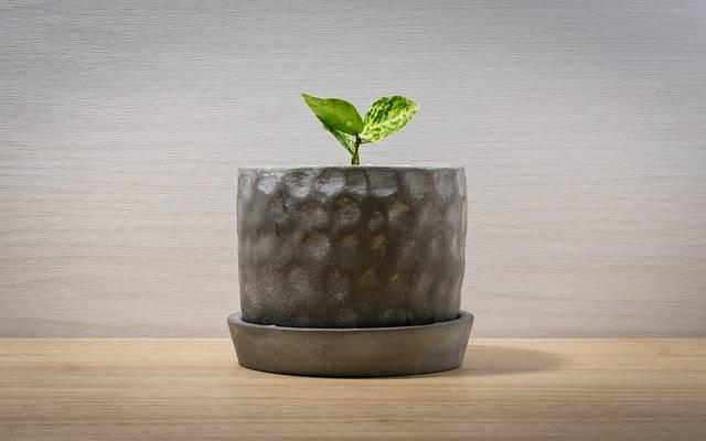 Free photo: Mark Cutting Line, Potted Plant - Free Image on Pixabay - 2390065 (6645)