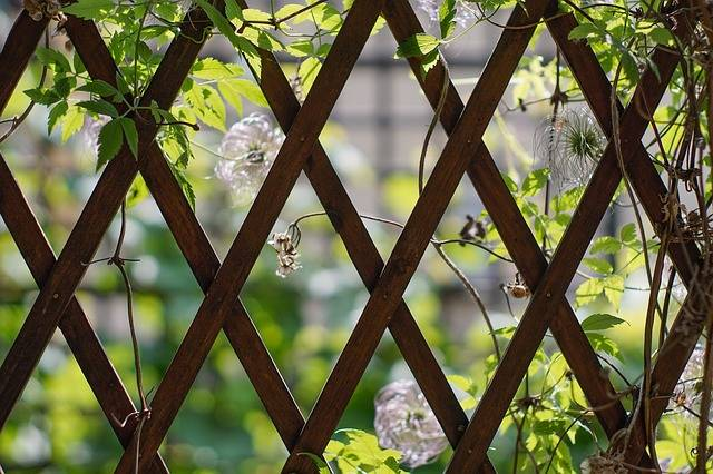 Free photo: Trellis, Wooden, Gazebos, Vines - Free Image on Pixabay - 2501643 (10108)