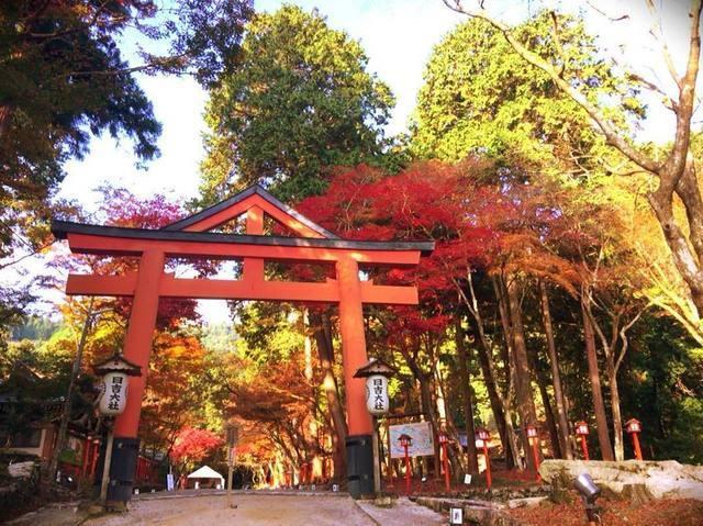 大阪から日帰り可能!紅葉が楽しめるパワースポット4選