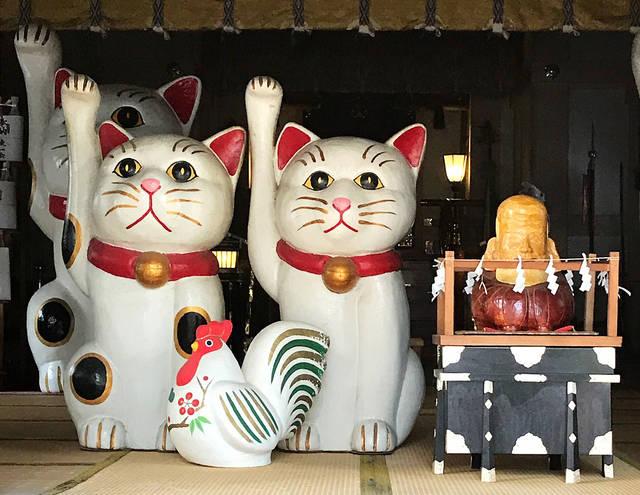 恋愛運アップにはこの壁紙!浅草・今戸神社の白猫がすごい