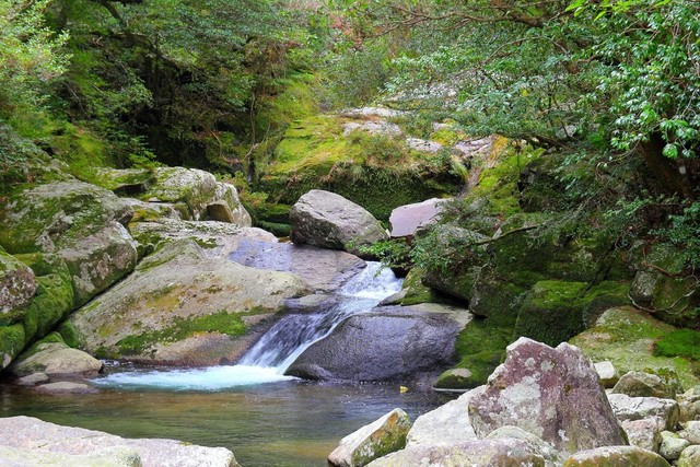 九州のパワースポット|屋久島