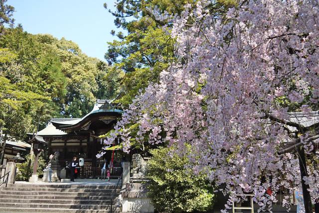 変わったおみくじ/京都 岡崎神社