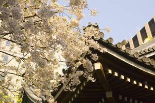 京都のパワースポット巡り 六角堂