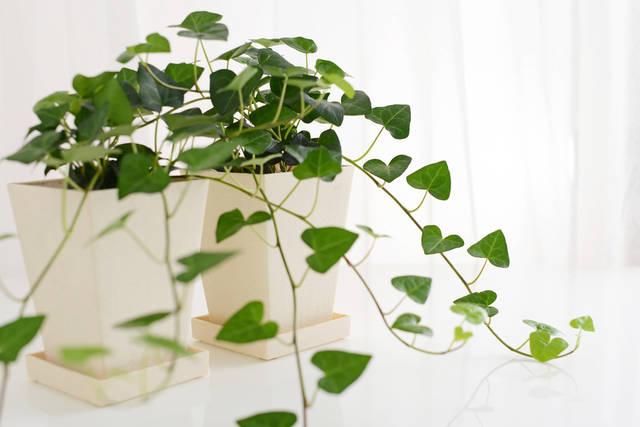 運気UP&癒される♪色々な場所で調和する☆冬こそ観葉植物のススメ☆