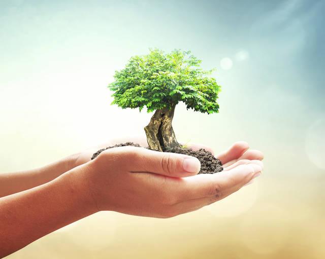 木と土重視の「庭風水」でパワーを吸収!恋愛運も仕事運もアップ