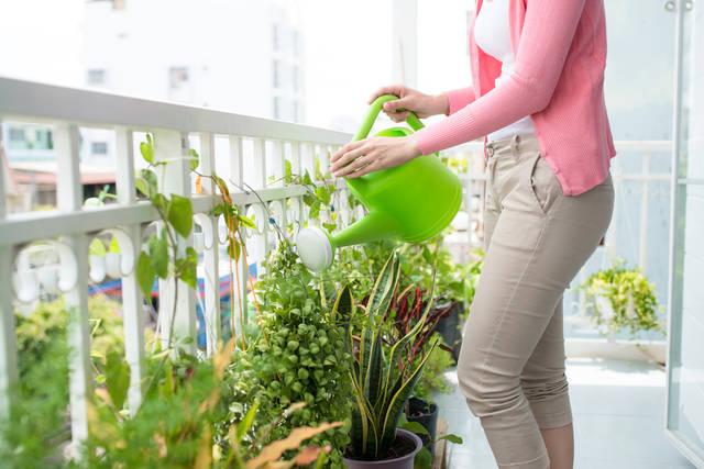庭やベランダに置きたい植物の方角と種類