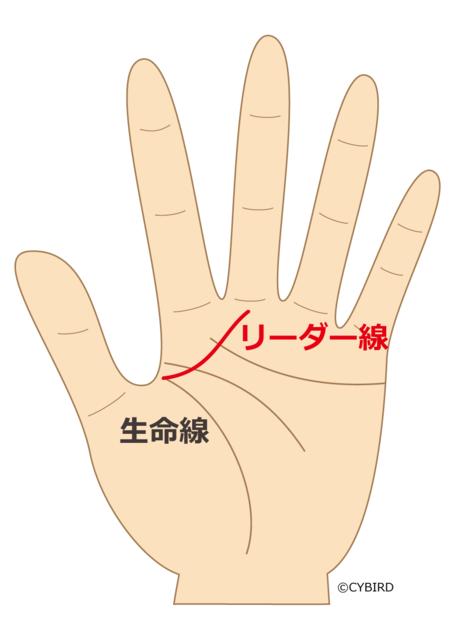 リーダー線(マネジメント線)