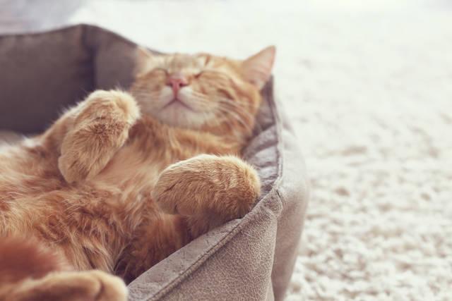 <犬好き・猫好き診断>犬と猫であなたの性格や行動力がわかります!