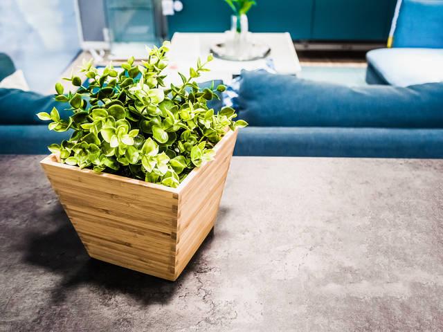 玄関の風水まとめ⑥ 運気UP&癒される♪観葉植物のススメ