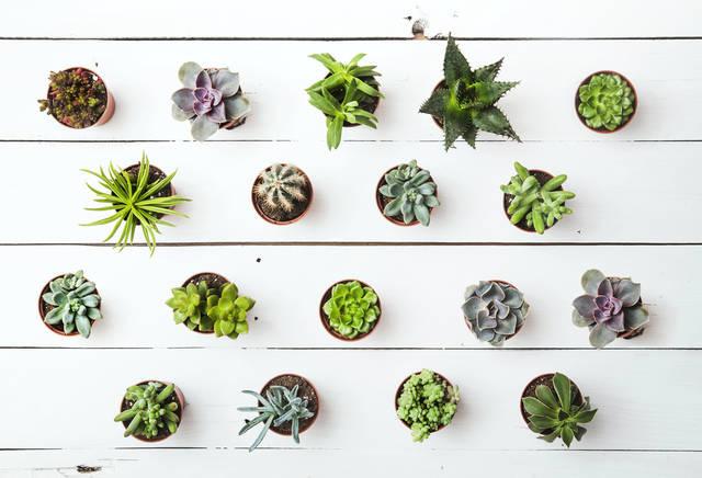 運気 観葉植物