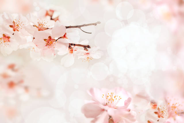 2019年のおとめ座のラッキーカラーは桜色