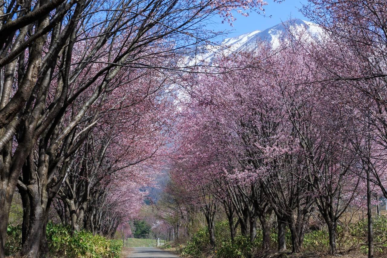 春のドライブにオススメ!日帰りで行ける関東のドライブスポット5選!