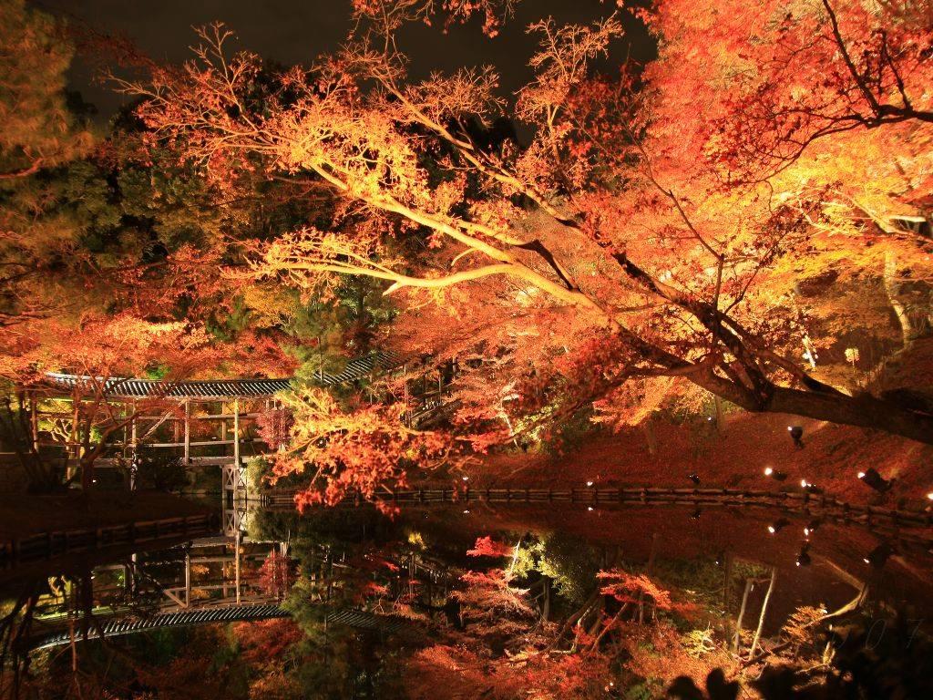 秋の行楽シーズン!都内から行けるおすすめドライブスポット3選!
