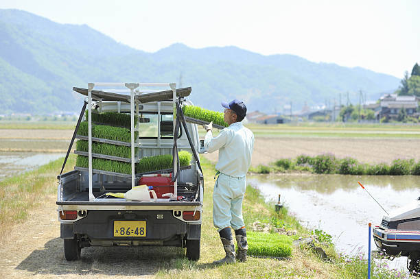 Japanese farmer Working in ...