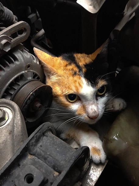 猫がクルマに入り込んでしまうトラブルは1ヶ月で19件も発生!冬じゃなくても猫バンバンしよう!
