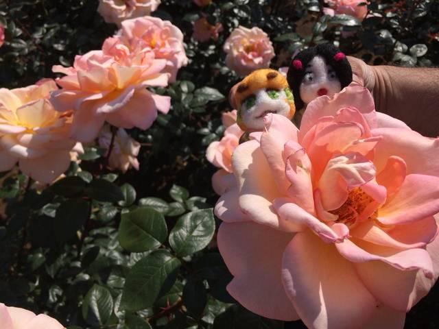400種類のバラに、ソバに、温泉まで楽しめる神代植物公園ってどんなところ?