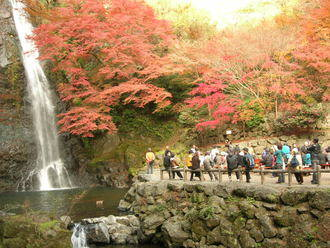 箕面公園 公式サイト : 日本の滝100選 -箕面大滝(みのお おおたき)-へ (33090)