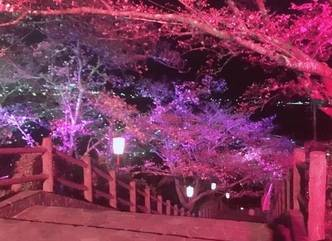 http://www.town.fujikawa.yamanashi.jp/kanko/event/sakuramaturi.html (58359)