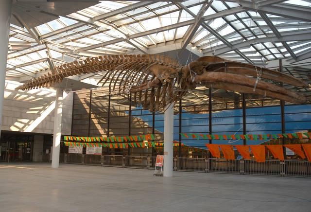 大阪市立自然史博物館 (59379)