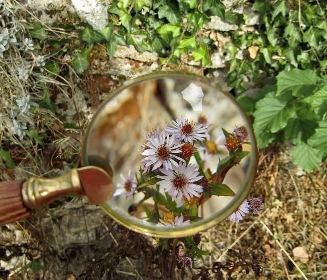 Magnifying Glass Flowers Macro · Free photo on Pixabay (47404)