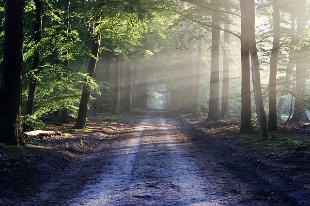Road Beams Path · Free photo on Pixabay (49620)