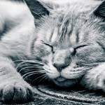 睡眠不足を甘く考えてはいけない 寝ても疲れがなかなか取れない人は知らないうちに身体に負担をかけているのかもしれません